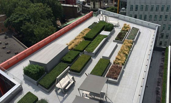 Rooftop garden on a London office block